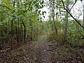 Path in the Hambach forest 08.jpg