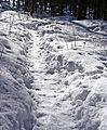 Path on snow.jpg