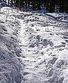 Path on snow.jpg