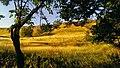 Pelagiada, Stavropolskiy kray, Russia - panoramio (2).jpg