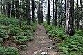 Persephone Nature Trail, Troodos, Cyprus - panoramio (45).jpg
