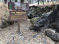Petrified Redwood - Sequoia langsdorfii, Metasequoia - 10.jpg