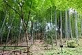 Phyllostachys edulis - Hakusan-jinja - Chusonji, Hiraizumi, Iwate - DSC04949.jpg