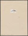 Piramutana blochii - 1700-1880 - Print - Iconographia Zoologica - Special Collections University of Amsterdam - UBA01 IZ14600099.tif