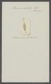 Planaria rostrata - - Print - Iconographia Zoologica - Special Collections University of Amsterdam - UBAINV0274 105 09 0017.tif