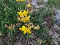 Plant of Teghenis 13.jpg