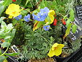 Plants for Sussex Prairies sale (15132021712).jpg