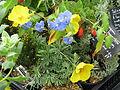 Plants for Sussex Prairies sale (15132021712).jpg