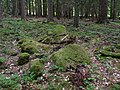 Pod Farským lesem 18.jpg