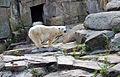 Polarbear0594bb.jpg