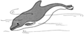 Porpoise (PSF).png