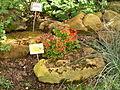 Powsin - Ogród Botaniczny (1).JPG