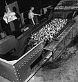 Producing Your Sugar- the Growing and Processing of Sugar Beet, Britain, 1942 D10921.jpg