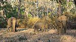 Protective Elephants (31705012534).jpg