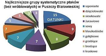 Puszcza Białowieska-ptaki.jpg