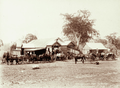 Queensland State Archives 2373 Farmers carts at Cheese Factory Lowood Company Yangan 1897.png