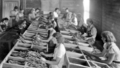 Queensland State Archives 4314 Women sorting tobacco in shed on tobacco farm at Beerburrum 1933.png