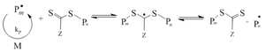 Reversible-deactivation radical polymerization - Chain equilibration step