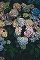 RHS Garden Wisley, Wisley, United Kingdom (Unsplash).jpg