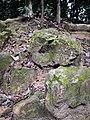 Rain forest 18.jpg
