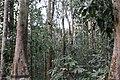 Rare plant diversity of Lawachara National Park.jpg
