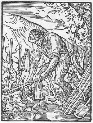 Hoe (tool) - Fork-hoe depiction in Der Rebmann (the vine-dresser). Jost Amman, Das Ständebuch, 1568