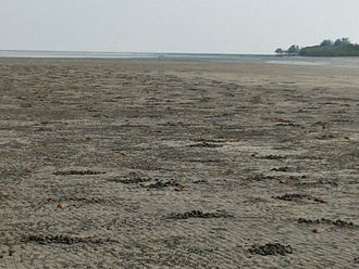 Henry Island (India) - The island is home to millions of red crabs. Red crabs can be seen in this photo.