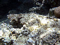 Red sea-reef 3839.jpg