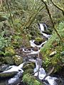 Regato afluente río Eume 2.jpg