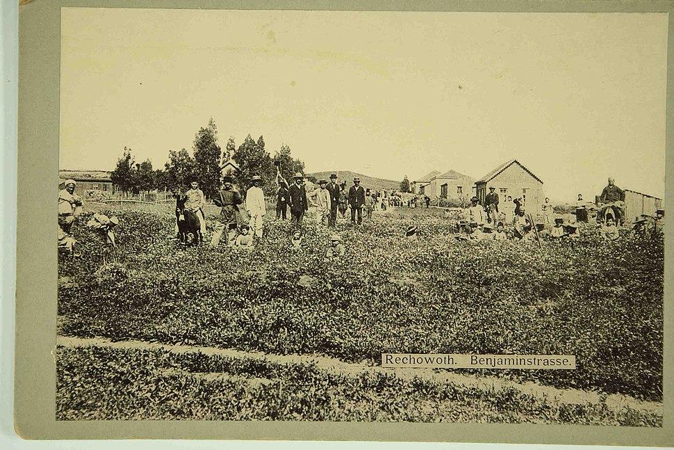 Rehovot 1893