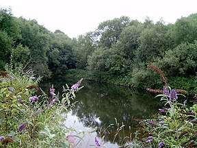 Remains of Ketley Canal - geograph.org.uk - 1079471.jpg