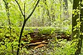 Rezerwat przyrody Morysin, park 4.jpg