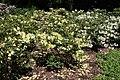 Rhododendronpark Bremen 20090513 147.JPG