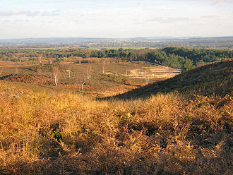 Ash Vale - To the east, associated Ricochet Hill in The Ash Military Ranges consists of sand and peat soils mostly covered with heather, fern and gorse, occasionally opened by public announcements from the Ministry of Defence.  The rolling plateau of 80-118m above sea level has spots with views west and east – here Guildford is visible, six miles away.