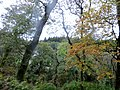River Camel glimpsed through the trees in the woods at Dunmere - October 2014 - panoramio.jpg