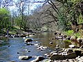 River Derwent - geograph.org.uk - 1529420.jpg