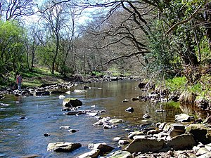 River Derwent, North East England - Derwent near Allensford
