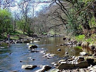 River Derwent, North East England - Derwent near Allensford