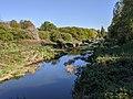 River Roding (1).jpg