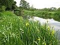 River Wey Navigation, Send Church Bridge - geograph.org.uk - 816154.jpg