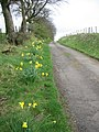 Road to Townend farm - geograph.org.uk - 404928.jpg