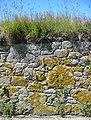 Roadside wall Saint Ouen Jersey.jpg