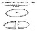 Robert Fludd on magnetism Wellcome L0001519.jpg
