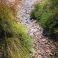 Rock-cornwall-england-tobefree-20150715-183829.jpg