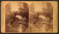 Rose bush arbor, Washington, by Haynes, F. Jay (Frank Jay), 1853-1921.png