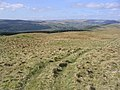 Rough grazing on Lagganpark Hill - geograph.org.uk - 399868.jpg