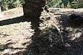 Ruínas da Capela da Senhora da Hera - 14.jpg