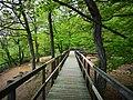 Söderåsen landscape Plank road.jpg
