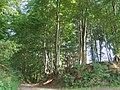 Süchtelner Höhen 2 (2006).jpg