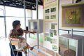 """Salle d'exposition permanente, Zone """"Reconnaître la libellule"""" - Photo SPL Pays de la Loire Environnement et Biodiversité - J. Auvinet.jpg"""